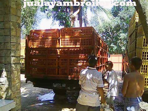 Jual Bibit Ayam Broiler Di Bogor jual ayam broiler di sentul barat bogor jual ayam broiler