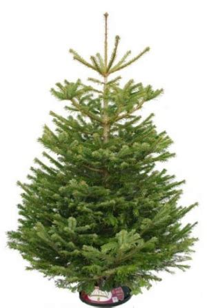 christmas tree shopping where and what to buy best real