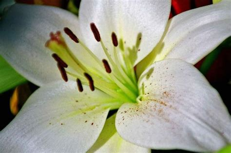 types of lily flowers jpg 1 comment hi res 720p hd