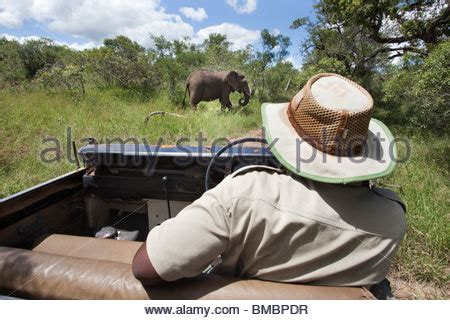 the open boat indifference of nature elephant watching on a safari game drive stock photo