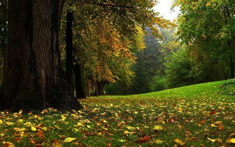 imagenes de bosques increibles imagenes de bosques imagenes de paisajes naturales hermosos