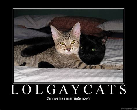Gay Cat Meme - religious nigerian woman disowns cat for being gay 171 why