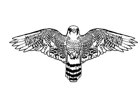 birds of prey coloring pages posts coloring pages
