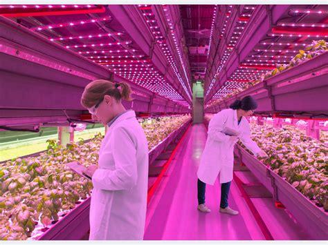 Led Le Pflanzen wachstumsf 246 rdernde led beleuchtung pflanzen