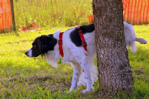 how to train dog to not pee in house 5 tips to stopping your dog peeing in the house
