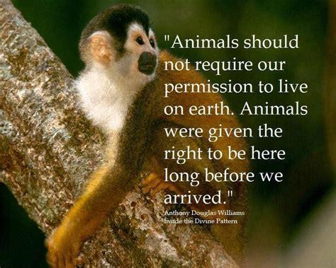 inspiring quotes  animals animal vegans