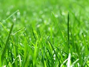 le gras stroom uit grasberm energienieuws