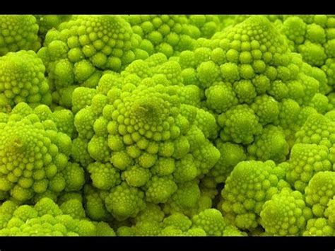 patterns in nature youtube amazing patterns in nature part 3 youtube