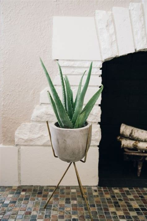 Shower Plants by 11 Plants For Your Condo Bathroom