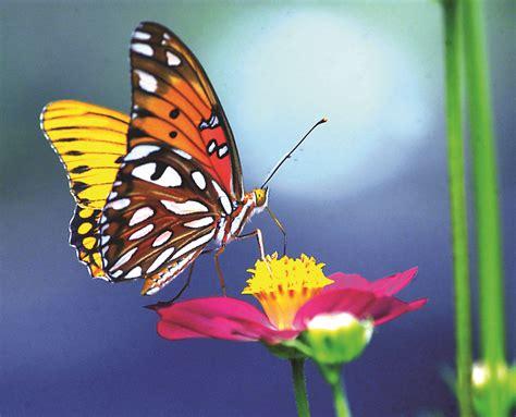 imagenes mariposas libres la mariposa mundo poes 237 a foros de poemas