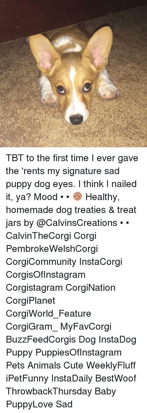 Puppy Dog Eyes Meme - funny puppy dog eyes memes of 2017 on me me