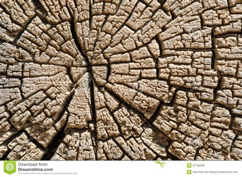 section of tree cross section of tree trunk royalty free stock image