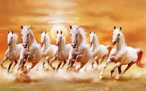 Wall Mural Wallpapers beautiful white horses galloping orange sunset sky ultra