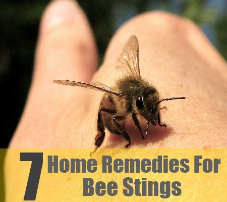7 home remedies for bee stings treatments cure