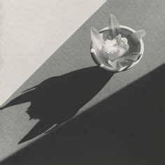 libro mapplethorpe flora the complete tulips robert mapplethorpe fine art florals robert mapplethorpe artwork and artsy