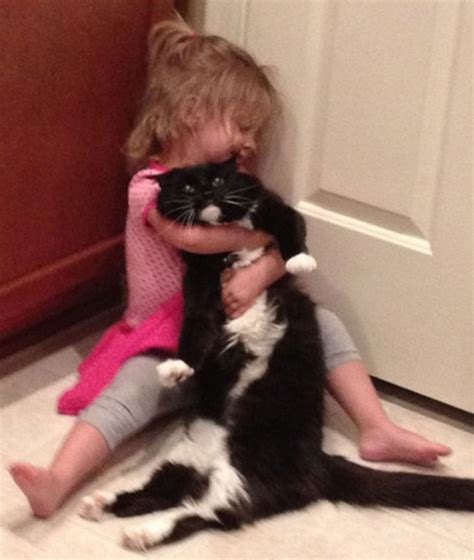pictures  evil cats  jerks   funcage