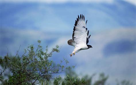 imagenes de jordan volando ave rapi 241 a volando hd 1920x1200 imagenes wallpapers