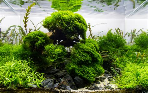 Precision Aquascapes by Mot S Aquascapes Added Aga 2015 Aquascapes Uk Aquatic