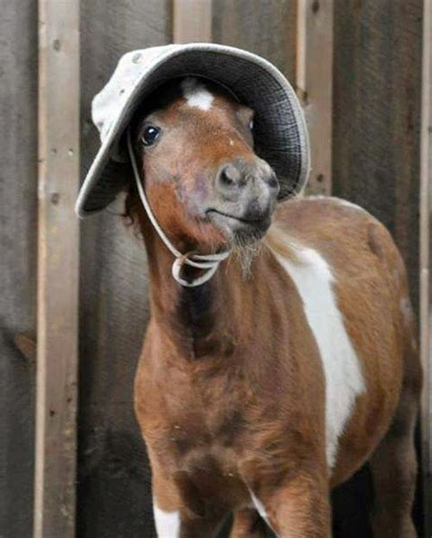 cute hairstyles for horses 142 best horse hairstyles images on pinterest