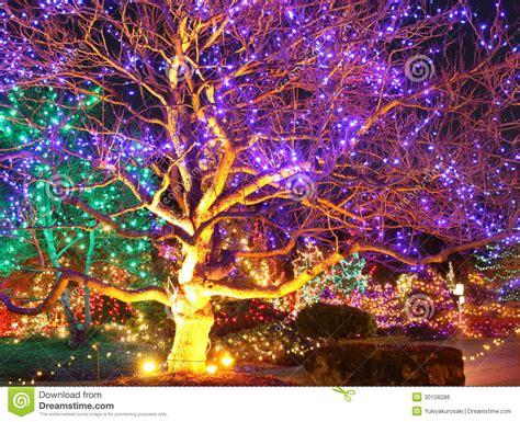 Christmas Lights On Outdoor Tree - fantasy garden royalty free stock image image 30108286
