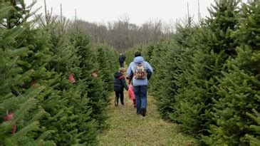 christmas tree farms mobile where to get fresh cut trees in butler warren counties