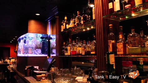 punch house chicago punch house chicago 240 gallon fish tank on bar tank it easy youtube