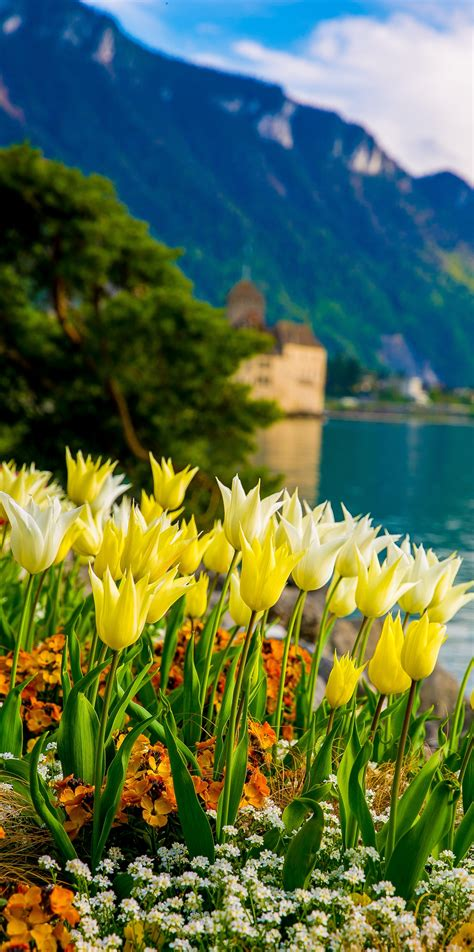 flowers on lake geneva with swiss alps montreux