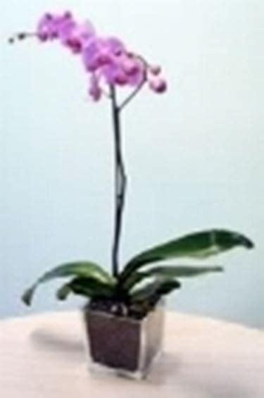 vasi orchidee vasi orchidea vasi e fioriere