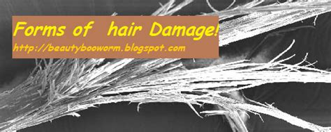 Types Of Damaged Hair by Types Of Hair Damage Bookworm
