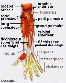 forte douleur musculaire au supinateur