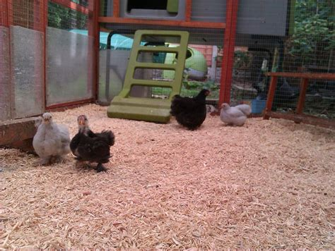 chicken coop bedding aubiose bedding 20kg poultry bedding chicken coops