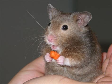 X Bamester Really Pictures Greedy Hamsters