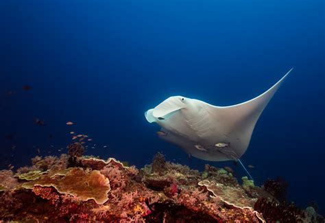 dive vacation best family dive vacations in raja at
