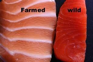 farmed salmon antibiotics mercury salmon safe