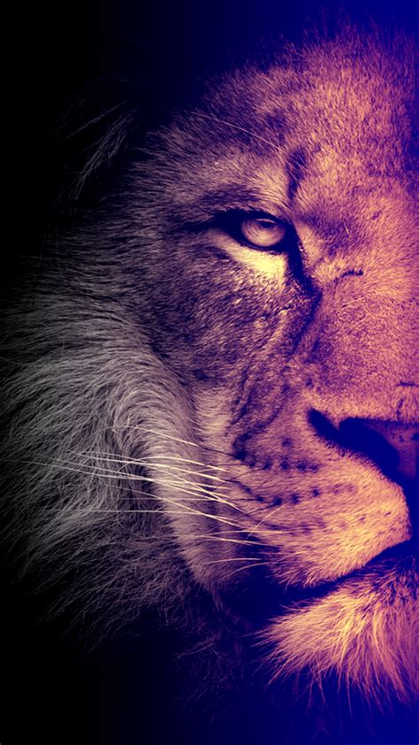wallpaper iphone 7 lion cool lion wallpapers for iphone