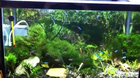 Aquascape Indonesia by Aquascape Indonesia