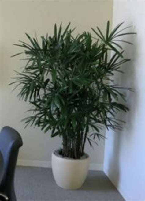 top houseplants for low medium and high light conditions best indoor plants for medium light