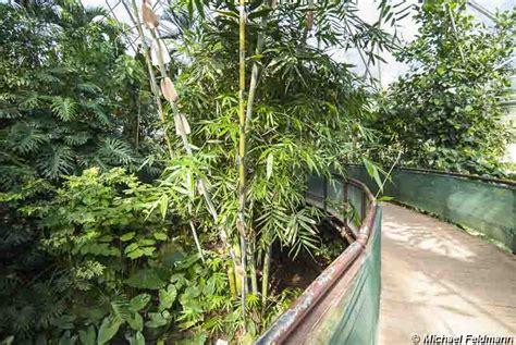 botanischer garten essen botanischer garten im grugapark essen