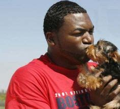 yorkie rescue fort myers ay big papi the boston sox s signature and black make a spirited
