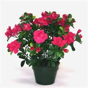 les bienfaits des plantes d 233 co du rendez vous design