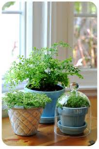 Home Decor With Indoor Plants Household Plants Do They Detox The Air