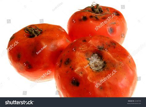 s day rotten tomatoes s day rotten tomatoes 28 images robert giordano s