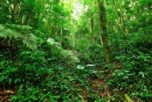 Plants In Tropical Rainforest - tropical rainforest biome pokemon go search for tips tricks cheats search at search com