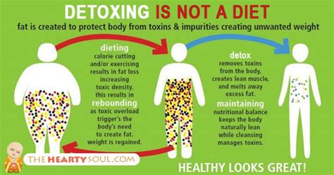 Exles Of Detox Toxins Shred10 Juice Plus by Toxins In The Www Pixshark Images Galleries