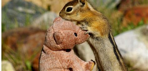 regarder vf la chasse à l ours r e g a r d e r 2019 film quot il nous faut regarder l animal autrement quot sciences et