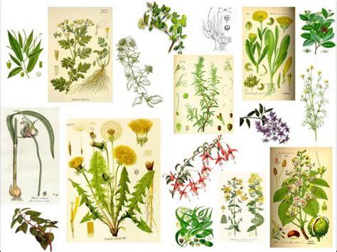 imagenes de flores medicinales 6 plantas medicinales que puedes cultivar en casa