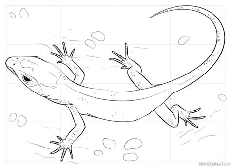 baby lizard coloring page how to draw a realistic lizard step by step drawing