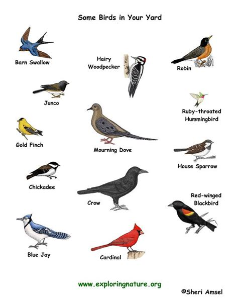 some types of birds and their names birds pinterest