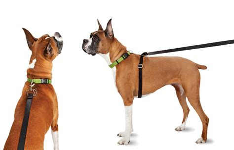 how to a to use a leash no pull leash shop no pull leashes thundershirt