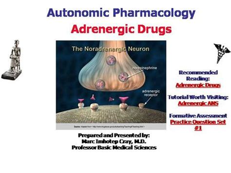 Ivms Ans Pharmacology Adrenergic Drugs Authorstream Pharmacology Ppt Presentation
